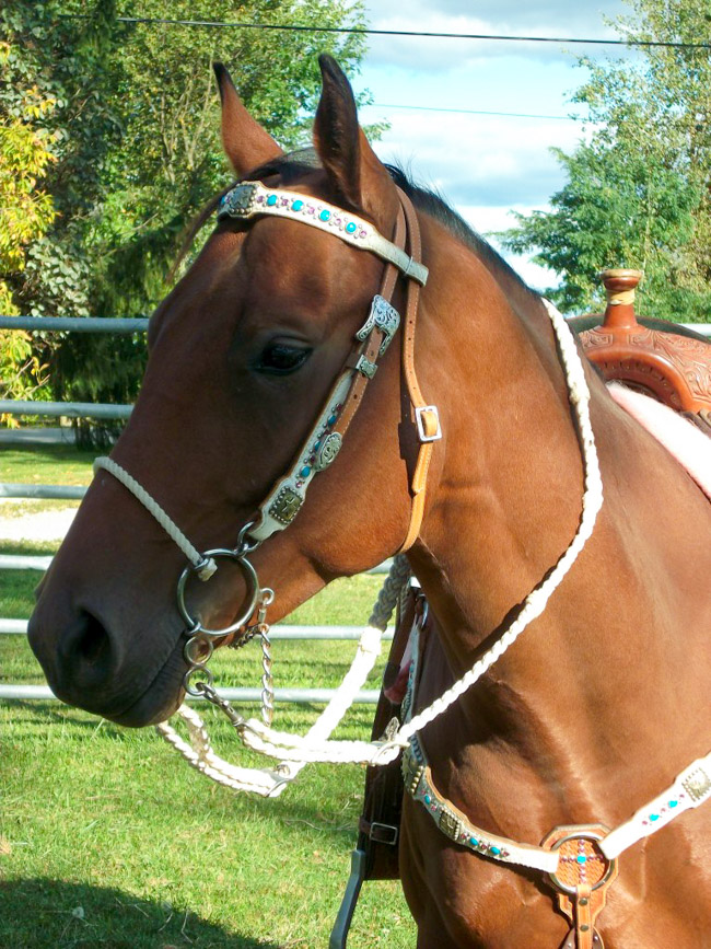 Bay horse with white, turquoise and pink tack