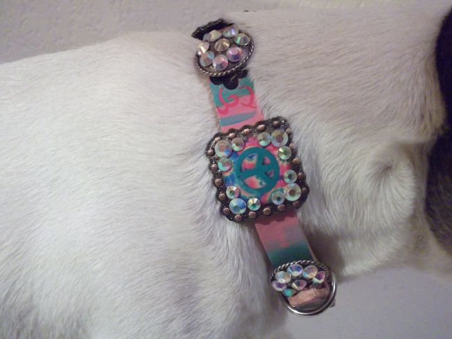 Cowboy Junkie dog collar