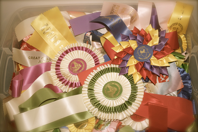horse show ribbons before