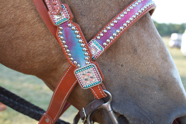 fuzzy pony noses with Crown Leather tack