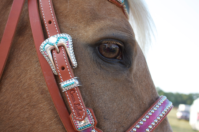 Kind eyes and an awesome tack set
