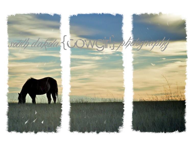 The South Dakota Cowgirl Giveaway