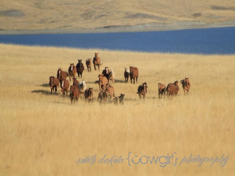 The South Dakota Cowgirl Photography
