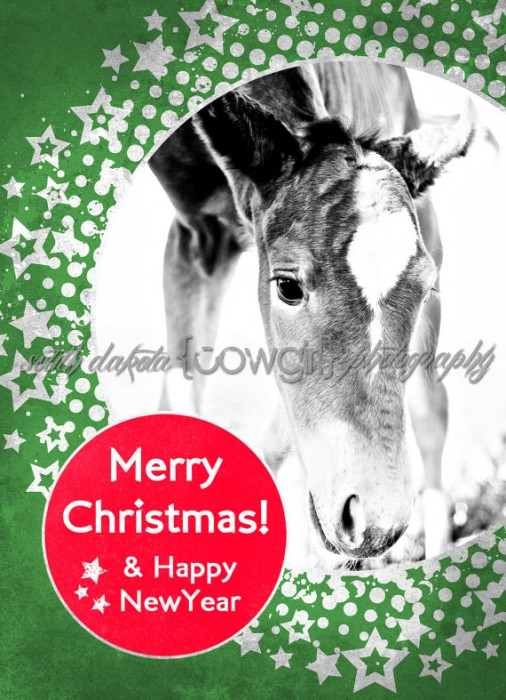 The South Dakota Cowgirl Christmas cards