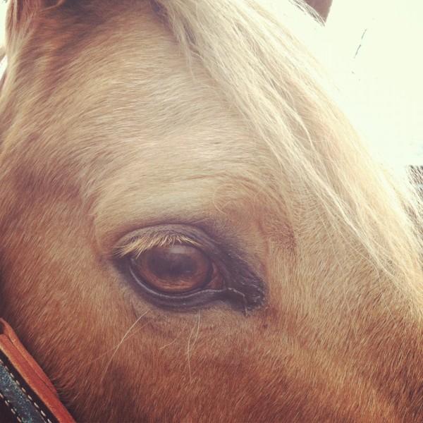 Topaz, Palomino Quarter Horse