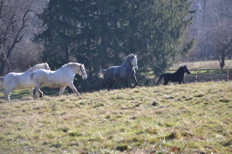 Rebecca's horses