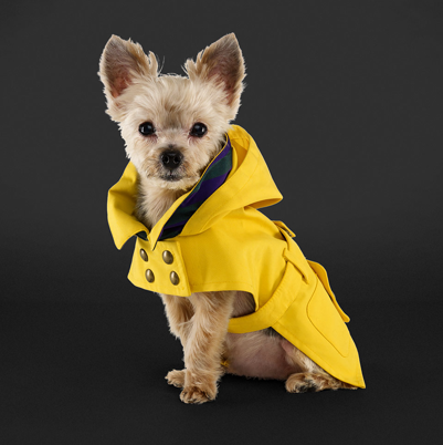 Ralph-Lauren-Dog-Raincoat