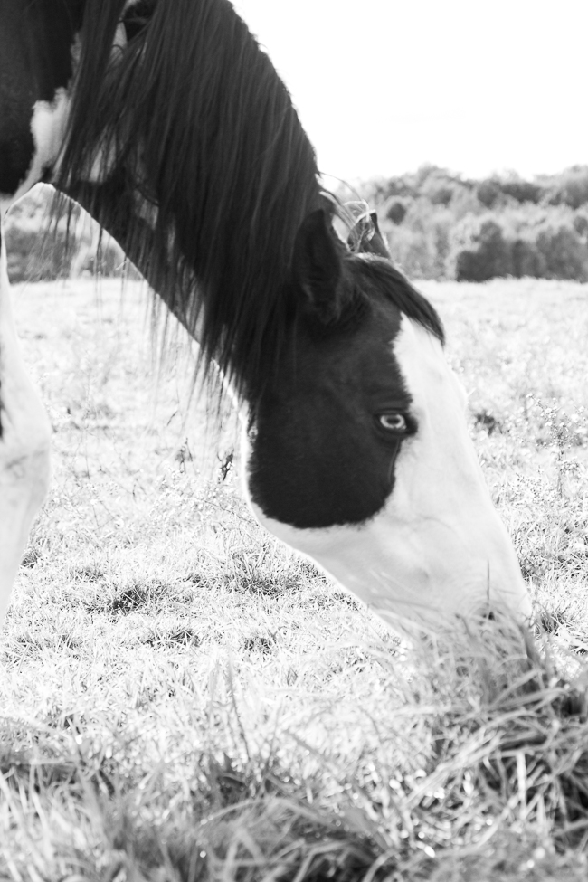 Black and White Overo Paint Horse Mare