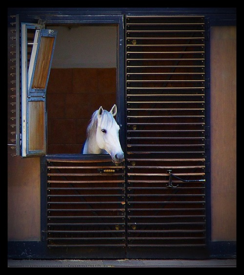 Stall Front at the Spanish Riding School