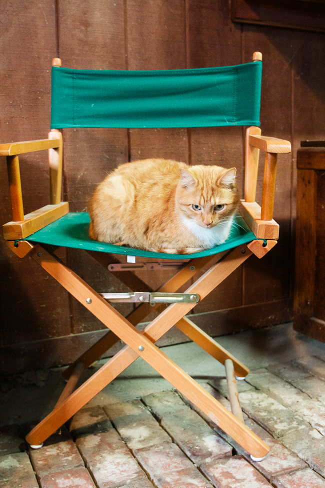Orange cat resting in the barn | Stable Style
