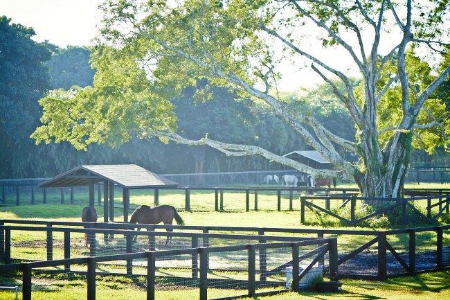 Stable Style: Blue Stallion Farm