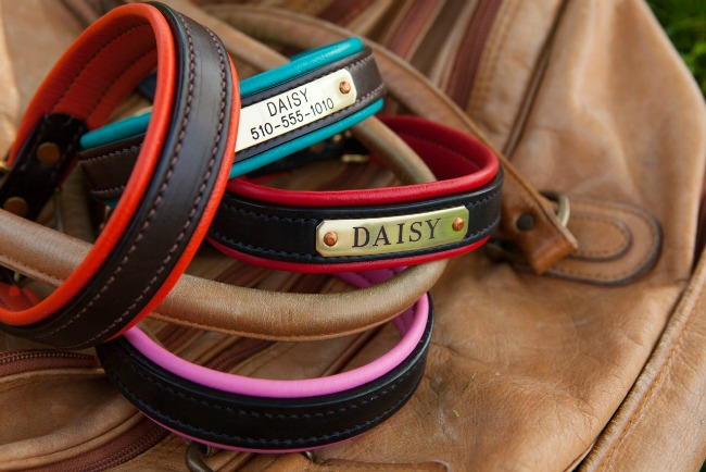 daisy1010 for the Dog