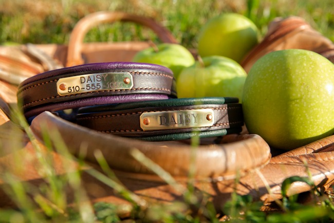 Leather Dog Collars with Name Plates by daisy1010