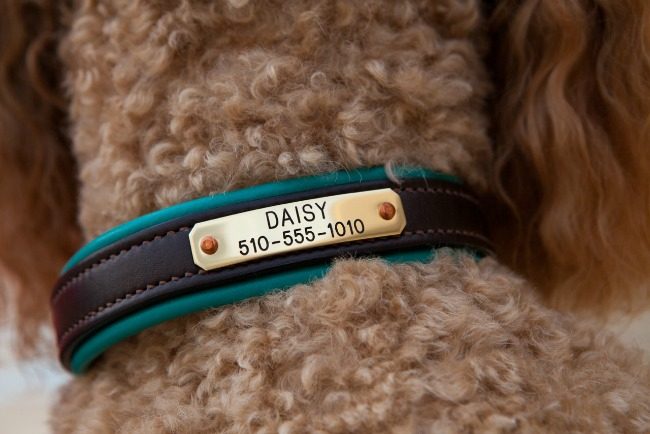 Personalized Teal Dog Collar by daisy1010