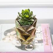 Succulent in a Gold Vase | Horses & Heels
