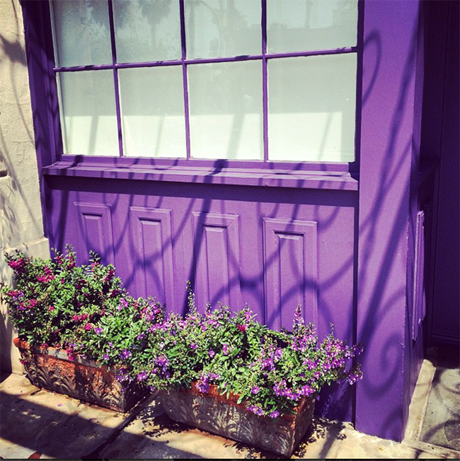 Purple Flowers and Wall