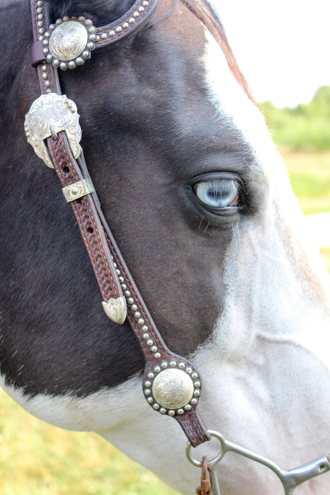 Black and White Paint Mare with Blue Eyes
