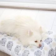 DIY Custom Elephant Print Fabric Dog Bed