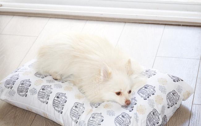 DIY: Custom Fabric Dog Bed