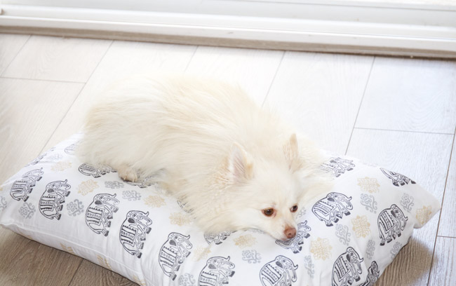 DIY: Custom Fabric Dog Bed