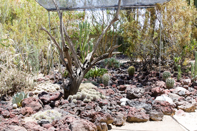 Cacti Plants and Rock Garden in Palm Springs