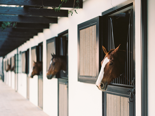 Horses in their stalls