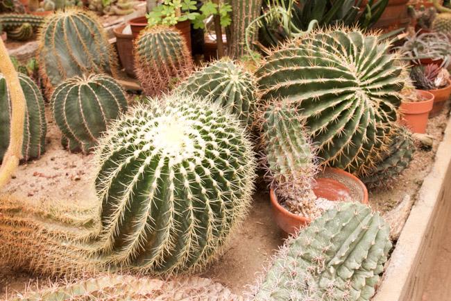 Moorten Botanical Garden cacti plants in terracotta pots