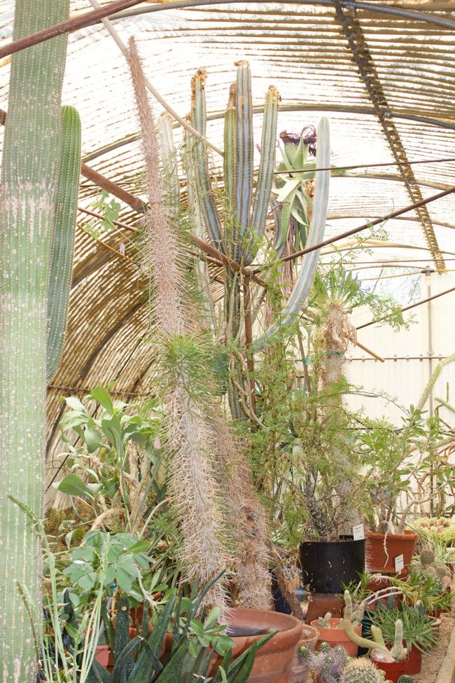 Moorten Botanical Garden green house