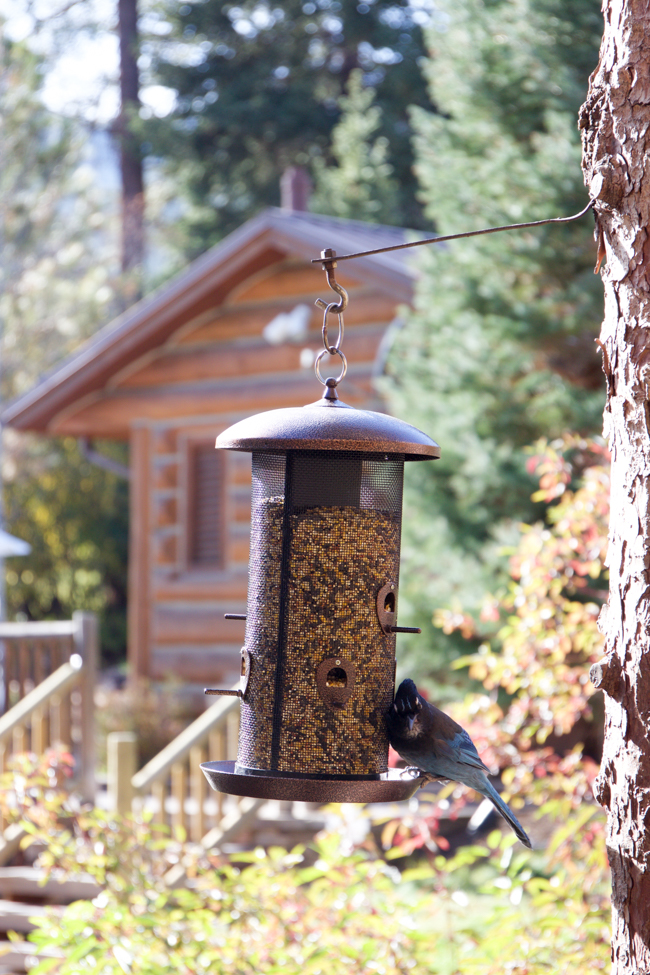 A bird at the feeder