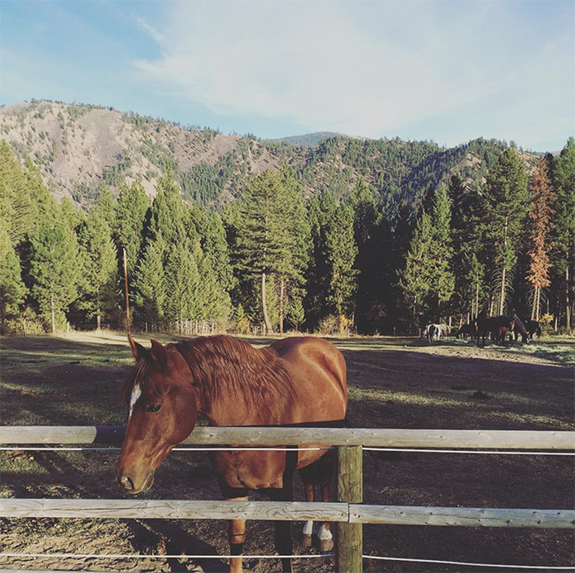 A horse at the ranch