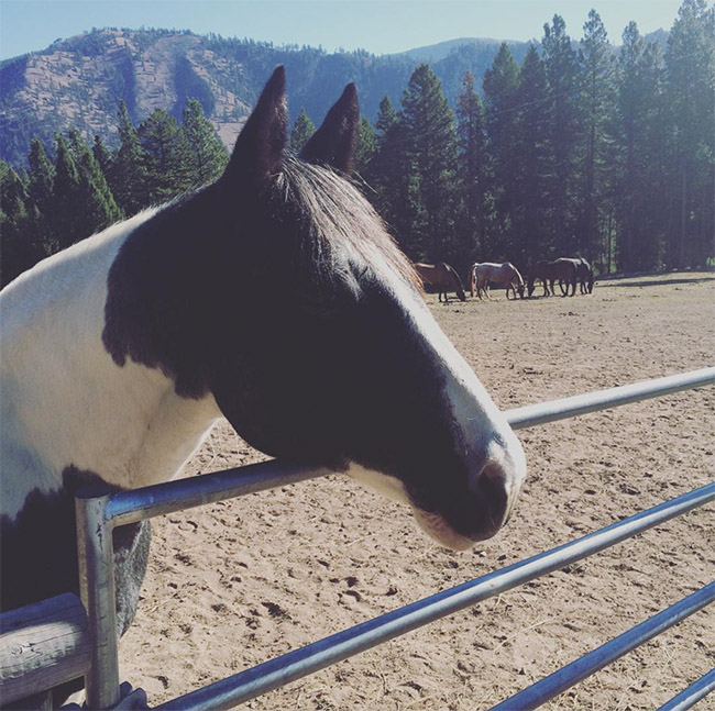 Black and white Paint horse at Triple Creek Ranch