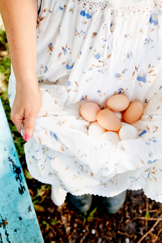 Freshly gathered brown and white chicken eggs