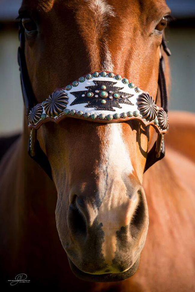 Heritage Brand halter, absolute perfection!