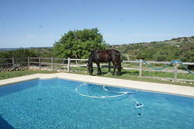 Poolside at The Sugar & Spice Ranch