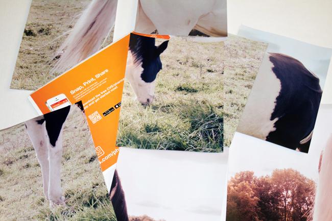 Horse photo broken up into pieces