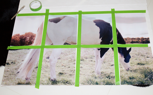 Horse photos for oversized artwork laid out