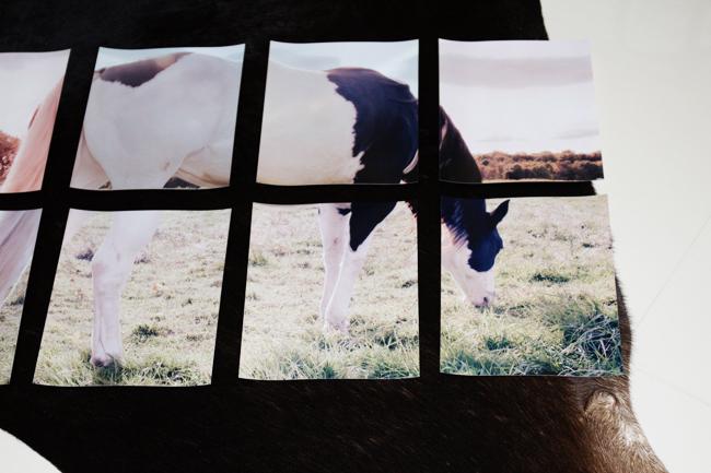 Horse photos for oversized artwork