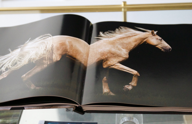 the love of horses large coffee table vintage horse bookanne