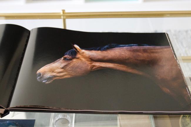 Inside Horse-Human- An Emotional Bond by Bob Tabor