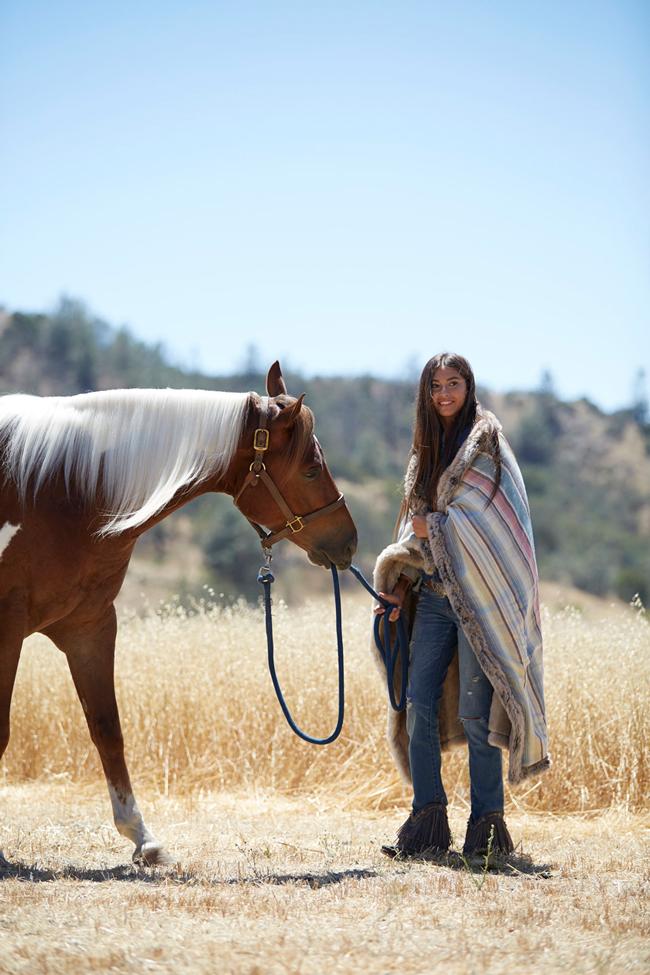 Junk Gypsy wild horses campaign