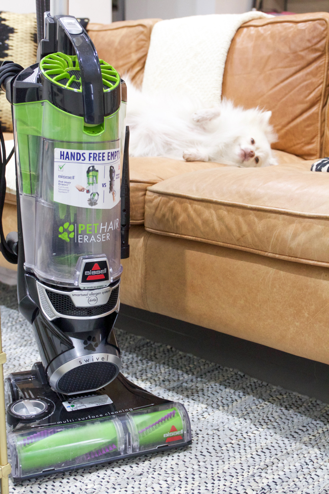 Mango and the BISSELL vacuum