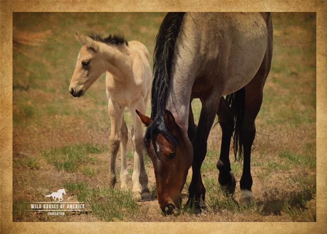 wild mustang mare and foal