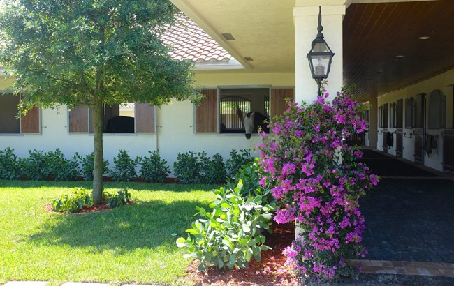 Stable Style: Florida Horse Property