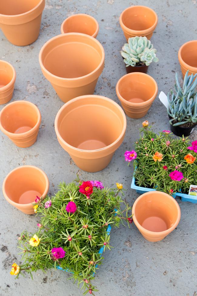 terra cotta pots and succulents before