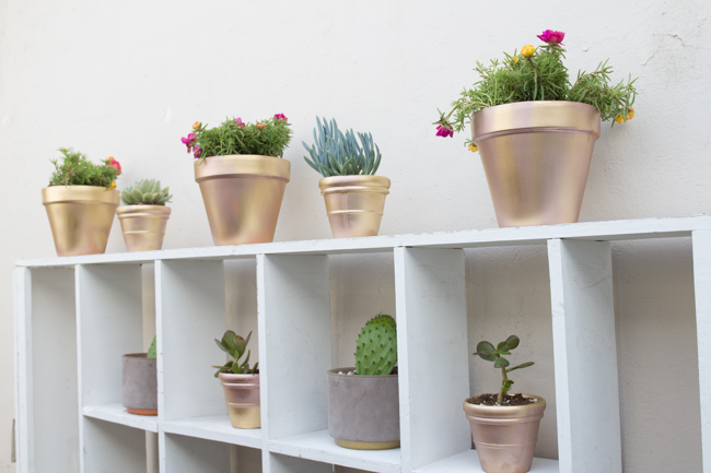 DIY plant station with cacti and succulents