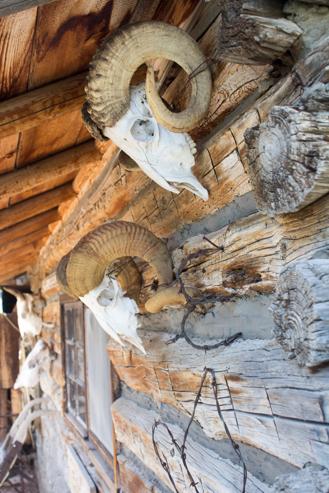 skulls on the lodge