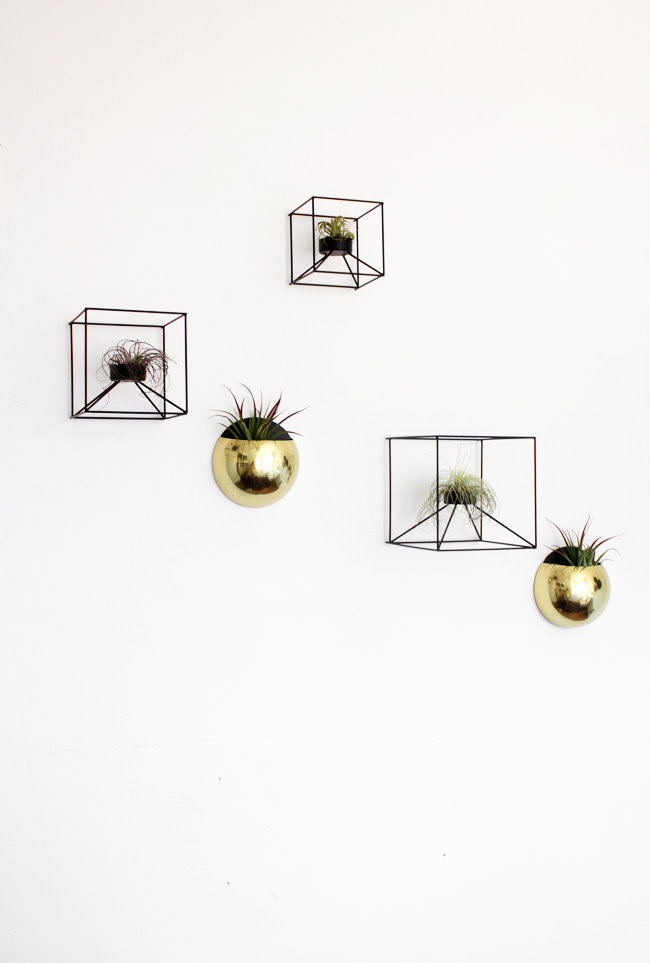 air plant display on the wall