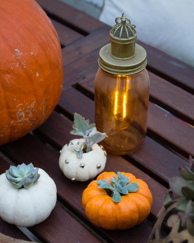 Succulent pumpkins for Halloween