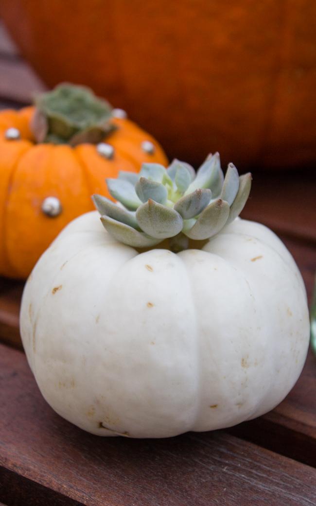 Succulent white pumpkin