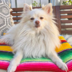 Spoil Your Dog with These Serape Accessories
